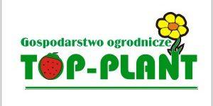 Top Plant - sadzonki truskawek frigo